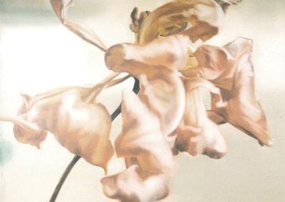 Les nacres, tulipe 1