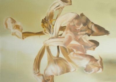 Les nacres… tulipe 2